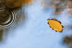 Yellow leaf floating on the water in autumn