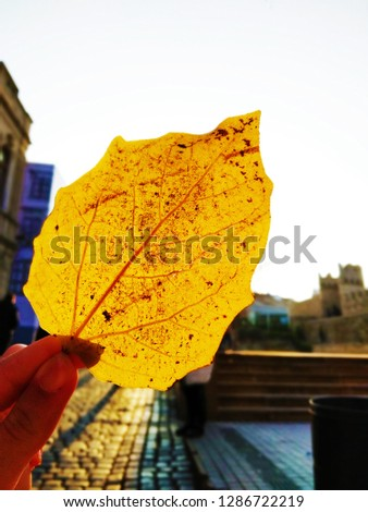 Yellow leaf in the hand of a girl.  Autumn concept. Closeup #1286722219