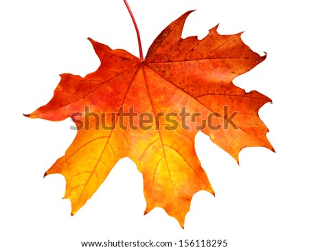 Yellow leaf isolated on white background