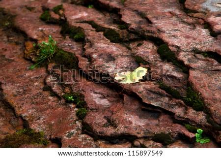 Yellow Leaf on Terraced Rock