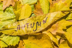 Yellow leaf with an inscription autumn on a background of yellow autumn leaves
