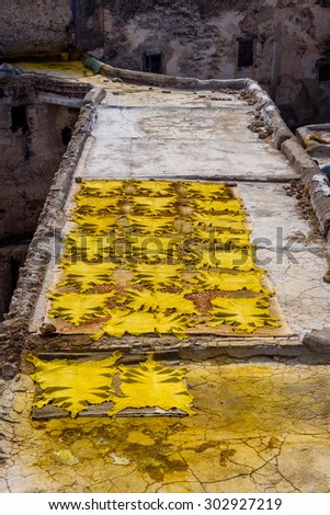 Yellow leather hides in one of the tanneries of Fez, Morocco