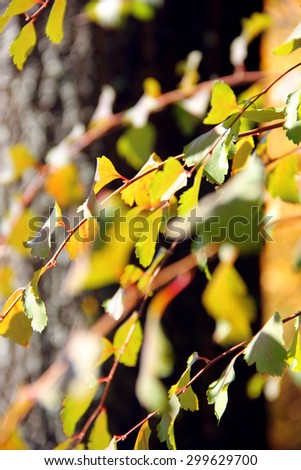 yellow leaves #299629700