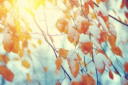 Yellow leaves in snow on sun. Late fall and early winter. Blurred nature background with shallow dof. The first snowfall.