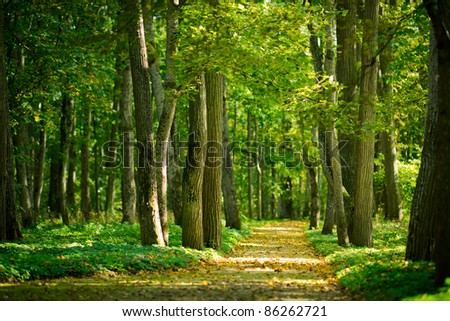 Yellow leaves on the alley in autumn forest - stock photo