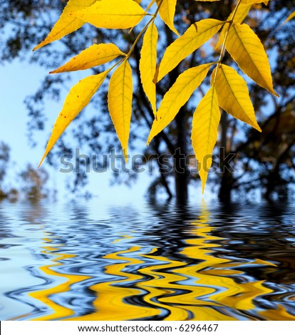 yellow leaves over water, shallow focus