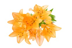 Yellow lilies on a white background isolated