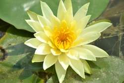 yellow lotus in new delhi location rajghat