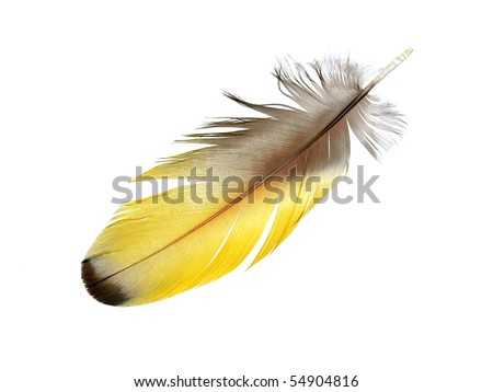 Yellow Macaw feather isolated