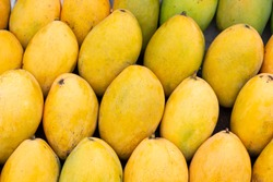 Yellow mango photo background. Bunch of tropical fruits. Oval yellow mango pile. Sweet dessert or vegetarian food. Exotic mango in the Philippines. Healthy diet with fruits. Raw juicy fruit closeup
