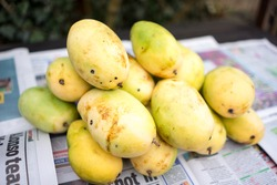 Yellow Mangoes from the Philippines.