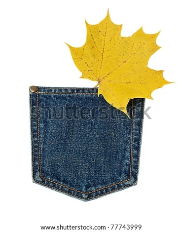 yellow maple leaf in the jeans pocket. isolated on a white background.