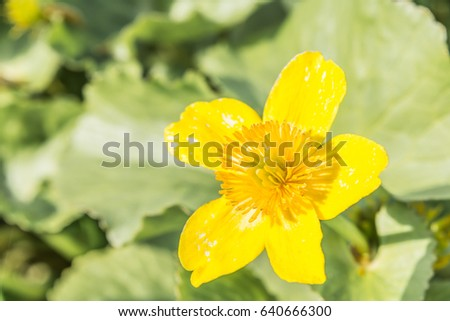 Free photos yellow flower 5 petals avopix yellow meadow flower with five petals on a background of green vegetation 640666300 mightylinksfo