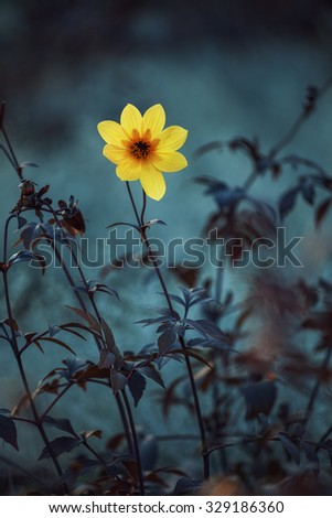 Yellow meadow flowers. Flowers in the design of natural dark tones. The image is the art