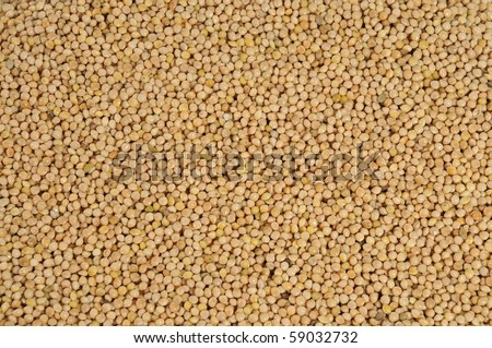yellow millet close up as background