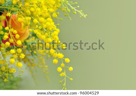 Yellow mimosa, the symbol of International Women's Day.