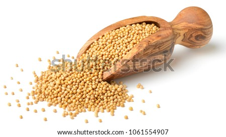 yellow mustard seeds in the wooden scoop, isolated on white #1061554907