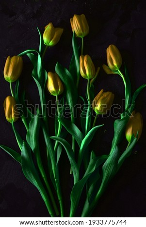 Yellow n tulips with black background - studio composition. Foto stock ©