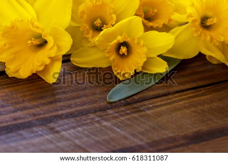 yellow narcissus or daffodil...