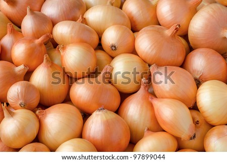 Yellow onions crop. Close up
