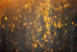 Yellow, orange and red beautiful autumn leaves on trees in autumn forest. Golden sunset and bokeh background