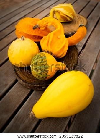 yellow orange Cucurbita pumpkin of wood background.vegetable food. farm garden.trick or treat. halloween october decoration .season autumn.zierkürbis harvest. Stok fotoğraf ©