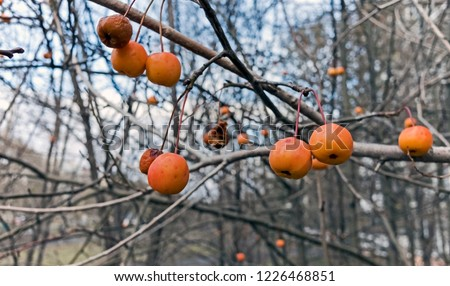 yellow-orange for Justin Bieber on autumn the tree