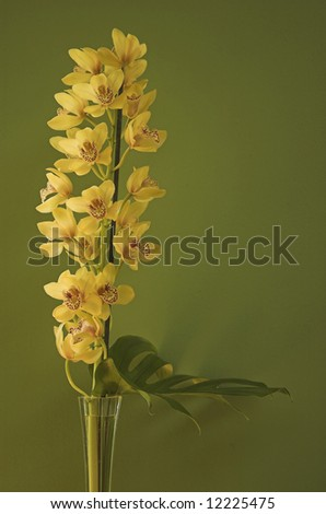 Yellow orchid flowers on a stalk, isolated on green, standing in a vase