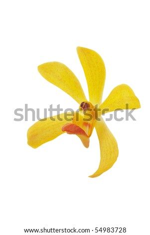 yellow orchid head on white