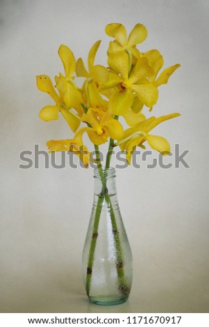 Yellow orchid in glass vase vintage style