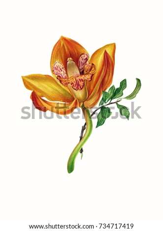 Yellow orhid. Botanical illustration in watercolor. Isolated on white.