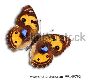 Yellow Pansy butterfly color isolated on white - stock photo