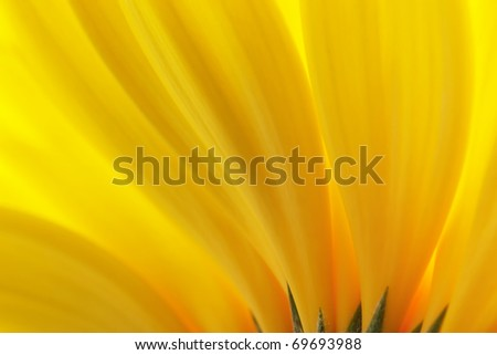 Yellow petals. Background.