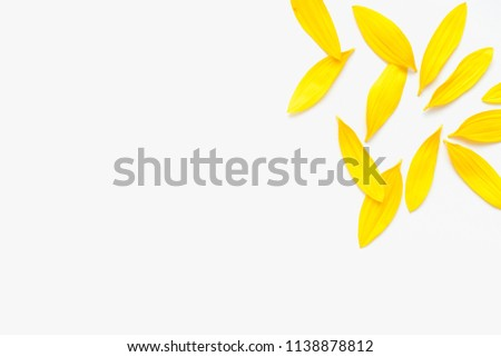 yellow petals, petals of sunflower #1138878812