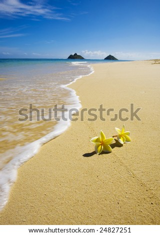 Yellow plumeria blossoms lie on white sand by the tropical pacific  on Lanikai Beach, Oahu, Hawaii