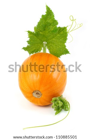 yellow pumpkin with leaves isolated on a white background vertical