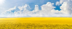 Yellow rapeseed field in the field and picturesque sky with white clouds