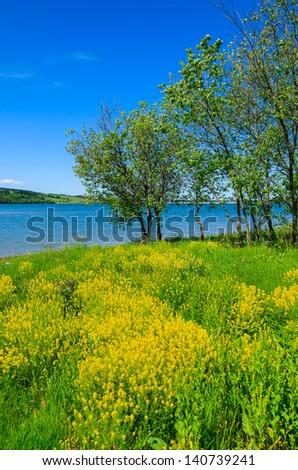 Yellow rapeseed flowers blooming lake view tree, Czorsztyn, Pieniny Mountains, Poland