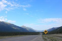 yellow roadsign saying caution buffalo ahead, warning, street into the wilderness, Canada