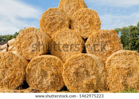 Yellow rolls of straw in the end of summer. #1462975223
