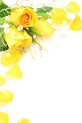yellow rose and haze grass