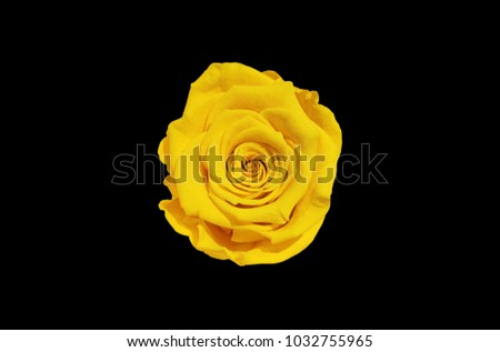 Free photos single yellow rose flower isolated on white top view yellow rose flower isolated on black background top view 1032755965 mightylinksfo