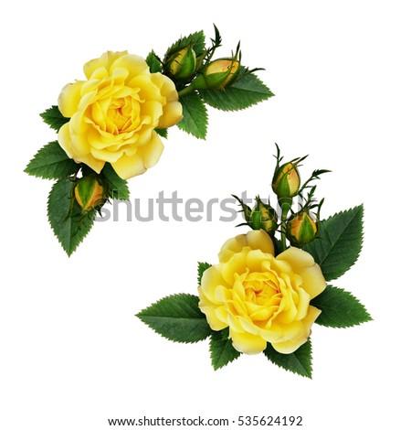 Yellow rose flowers arrangements isolated on white ez canvas yellow rose flowers arrangements isolated on white mightylinksfo