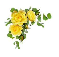 Yellow rose flowers with eucalyptus leaves in a corner arrangement isolated on white background. Flat lay, top view.