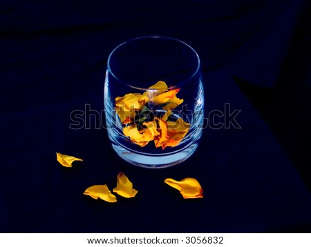 Yellow rose petals and glass on blue background