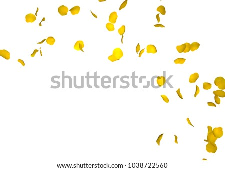 Yellow rose petals fly in a circle. The center free space for Your photos or text