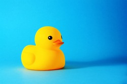 yellow rubber duck isolated on blue background