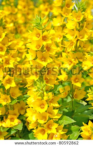 Yellow flowers names and pictures description benkid big yellow bright yellow flowers bright yellow flowers wallpaper gallery bright yellow flowers names bright small mightylinksfo