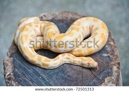 Yellow snake on wood