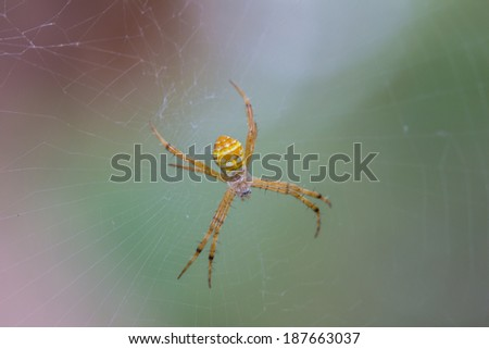 Stock Photo Yellow Spider